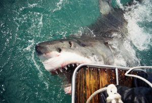 Top Five Shark Cage Diving Hotspots in the World