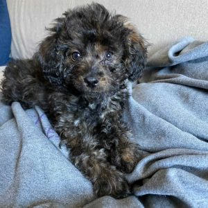Does Your Dog Use The Curly Girl Method?